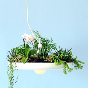 Babylon Hanging Light And Planter - ceiling lights