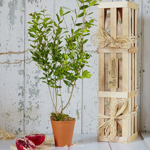 Pomegranate 'The Tree Of Love' Gift - home accessories