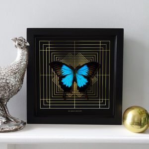 'Deco' Mounted Real Ulysses Butterfly - mixed media & collage