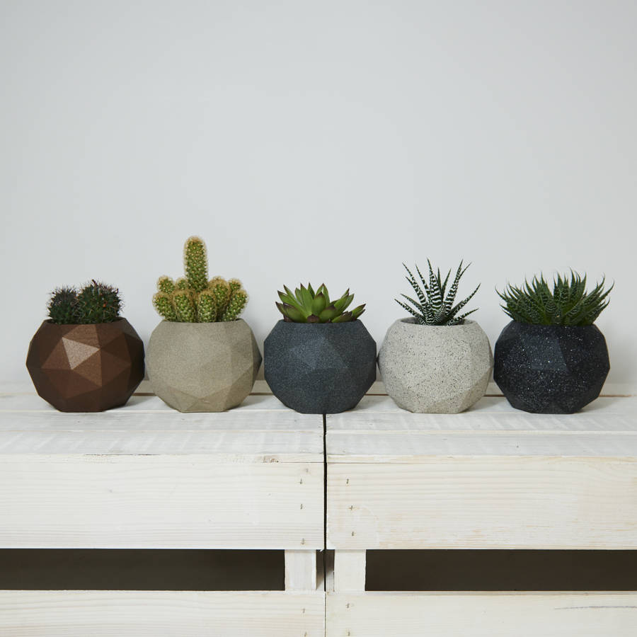 Cactus Gifts and Presents | notonthehighstreet.com