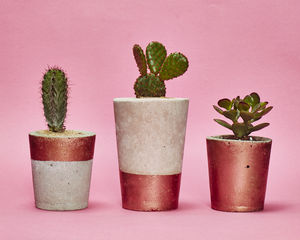 Copper Concrete Plant Pot With Cactus Or Succulent