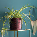 Metallic Burgundy Plant Pot