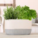 White And Grey Dipped Ceramic Trough Planter