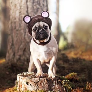 I'm A Bear Pet Hat - clothes & accessories
