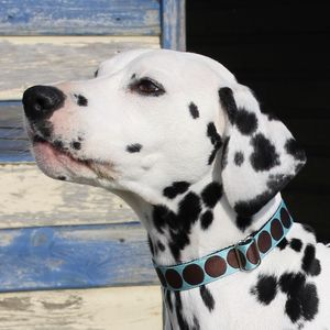 Big Spotty Dog Collar - pet collars