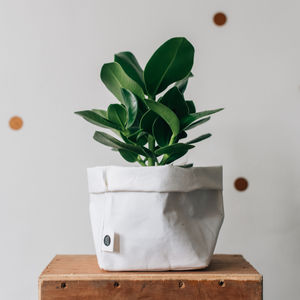 White Washable Paper Plant Bag - pots & planters