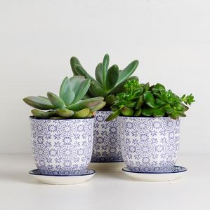 Blue Liberte China Pot And Saucer Gift