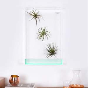 Airbox Glass Effect Plant Display - flowers, plants & vases