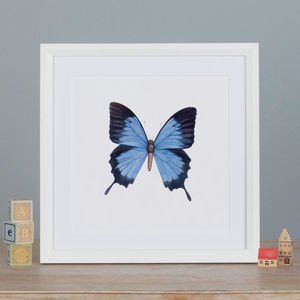 Illustrated Butterfly Print