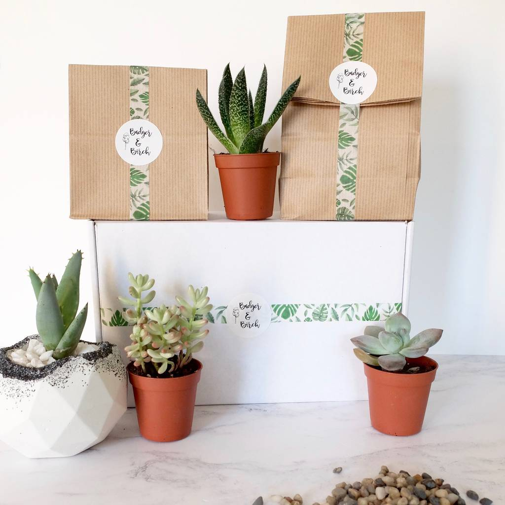 Succulent Terrarium Diy Gift Kit By Badger And Birch