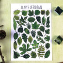 Leaves Of Britain Illustrated Postcard