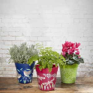 Colourful Garden Plant Pot - pots & planters