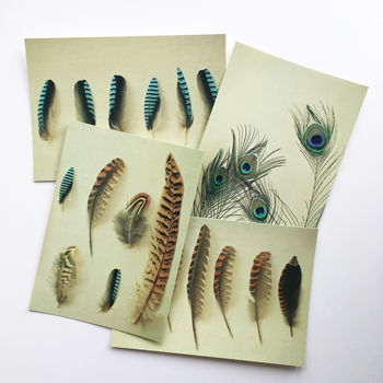 Set Of Four Feather Postcards