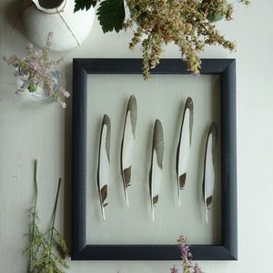 Framed Magpie Feathers - still life