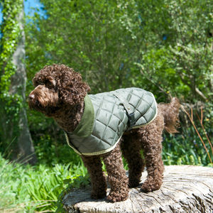 Quilted Dog Coat - clothes & accessories
