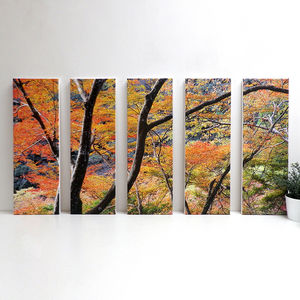 'Rainbow' Japanese Forest Canvas Print - photography & portraits