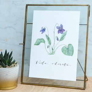 Watercolour Botanical Violet Print - posters & prints