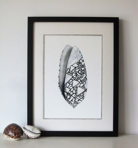 Framed Limited Edition Ocean Conch Shell - limited edition art