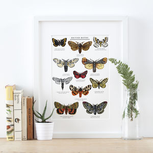 British Moths Illustrated Giclée Print - drawings & illustrations