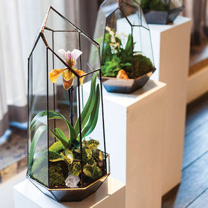 Terrarium Design School Experience For One - craft & art
