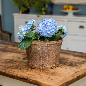 Large Aged Zinc Planter Plant Pot