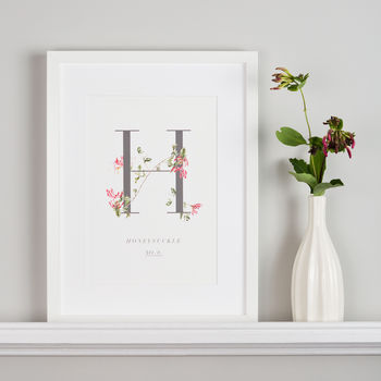 Botanical Honeysuckle Illustration Giclee Art Print