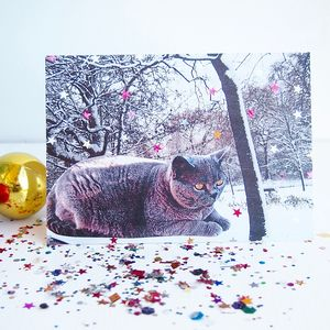 British Blue Shorthair Cat Snow Christmas/Birthday Card - blank cards