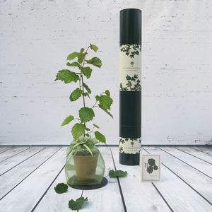 Exclusive Truffle Tree Gift - best father's day gifts