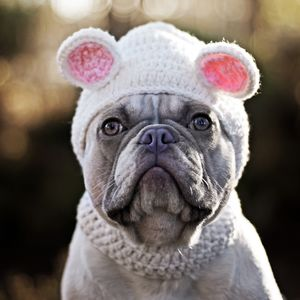 I'm A Bear Pet Hat - dogs