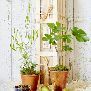 Mediterranean Orchard Tree Gift Crate - gifts for him