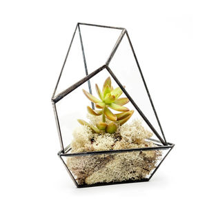 Mini Succulent House