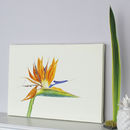 Tropical Botanical Canvas Art Print 'Bird Of Paradise'
