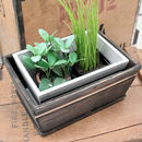 Small Personalised Planter Inside Large Planter