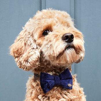 Party Luxe Velvet Dog Bow Ties