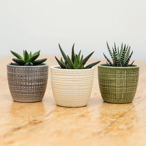 Trio Of Ceramic Planters With Succulent Plants