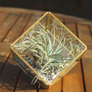 Copper Colour Glass Cube Air Plant Terrarium Kit