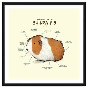 Anatomy Of A Guniea Pig