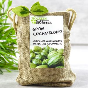 Grow Your Own Mini Melons Set - stocking fillers