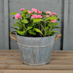 Blue Washed Wooden Pail Planter