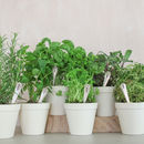 Set Of Six Personalised Vintage Herb Markers