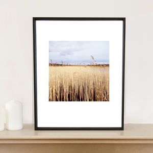 Water Reeds, Lopham Fen, Suffolk Art Print - nature & landscape