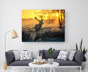 Borrowed Light, Canvas Art - canvas prints & art