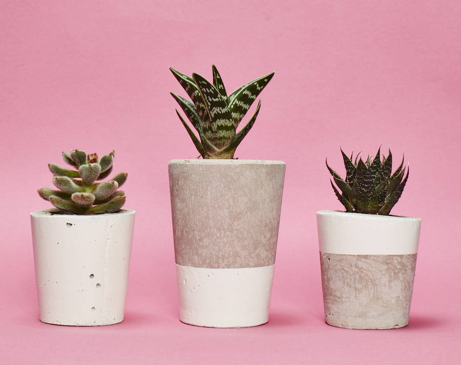 white concrete plant pot with cactus or succulent by hi