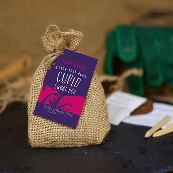Grow Your Own Cupid Sweet Pea Mini Plant Kit