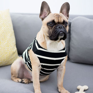 Breton Stripe Dog Vest With Colour Options - dogs