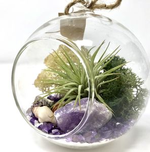 Amethyst Crystal Air Plant Terrarium Kit - terrariums