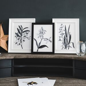 Set Of Three Monochrome Botanical Prints