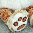 Cuddly Cat Toy And Set Of Two Matching Face Covering