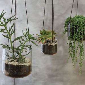 Clear Hanging Planter - the greenhouse edit