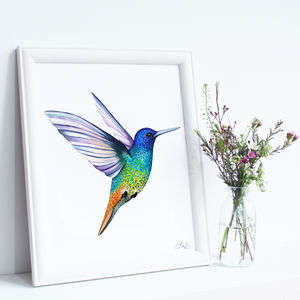 Golden Tailed Sapphire Hummingbird Illustration Print